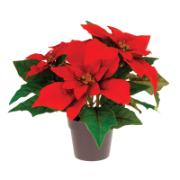 CHRISTMAS FLOWER IN POT 25CM