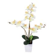 ORCHID BONSAI W/18FLOWER 75CM