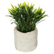 GREEN PLANT CEMENT POT